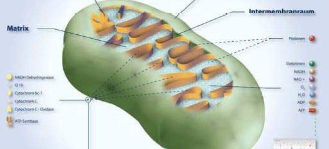 Biophotonen-Therapie